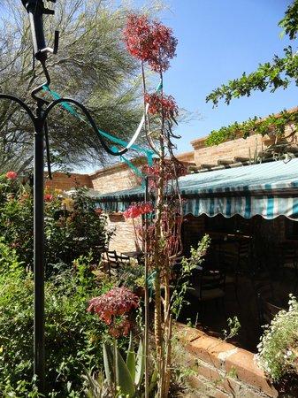 Tohono Chul Garden Bistro: view from a garden table