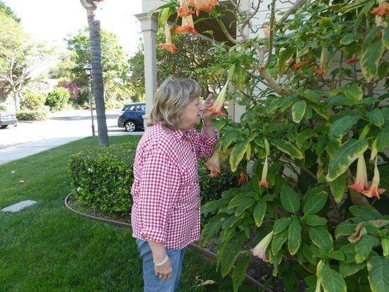 Pacifica Suites Santa Barbara: Enjoying garden areas