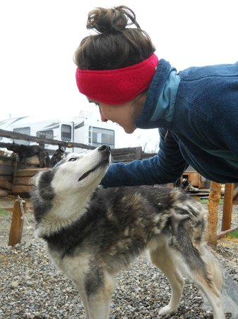 EarthSong Lodge - Denali's Natural Retreat : Dogs!