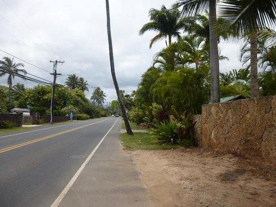 Kailua Beach Park : 散歩気分