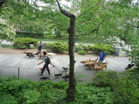 Central Park: Los paseadores de perros