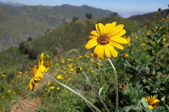 Refugio Vinak: Wildflowers on Horseback ride
