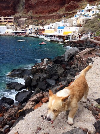 Amoudi Bay : Stray dog along the water
