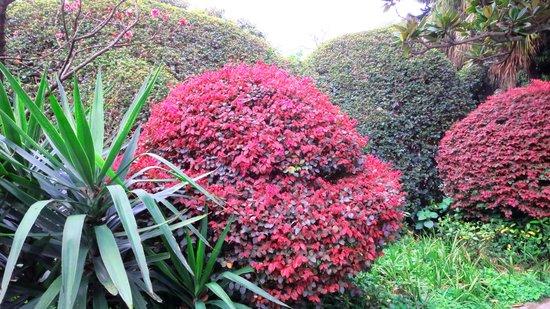 Fubo Hill : Beautiful & Colorful Trees.