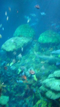Tennessee Aquarium | 1 Broad Street, Aquarium Plaza, Chattanooga, TN 37402