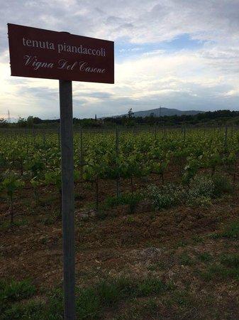 Residenze Piandaccoli: Alrededor de toda la casa hay caminos para pasear y apreciar las vistas