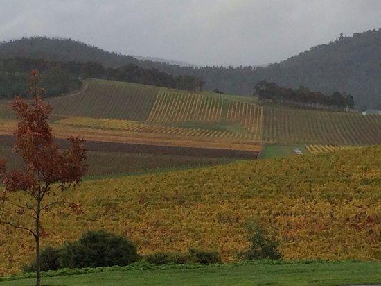 De Bortoli Winery: Fall foliage near De Bortoli entrance