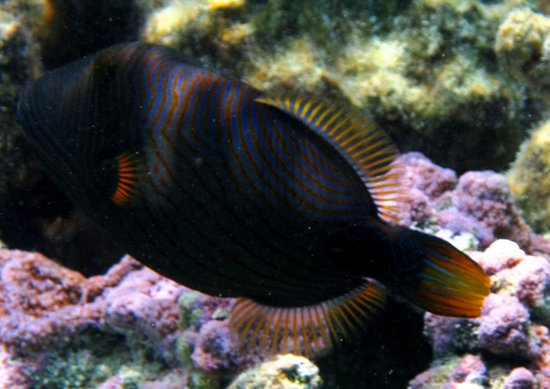 Maohi Nui: A snorkel in the Coral Gardens