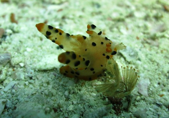 Forra Diving - Day Trips: Pikachu nudi