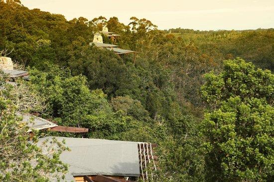 Tsala Treetop Lodge Villa Views