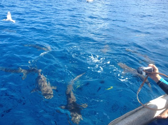 Moana Adventure Tours: Snorkelling with sharks