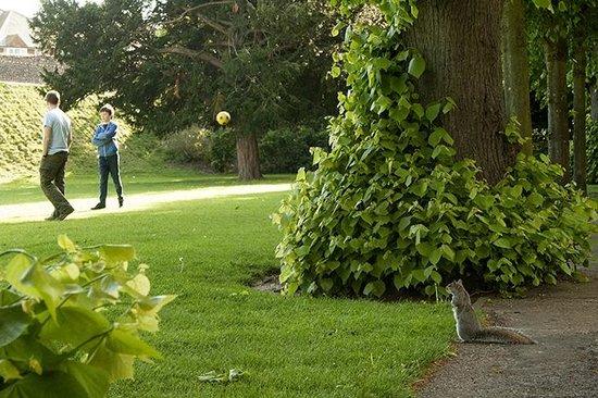 Dane John Gardens: Squirrel
