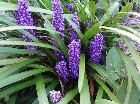 Quest Wellington: Beautiful unusual flowers