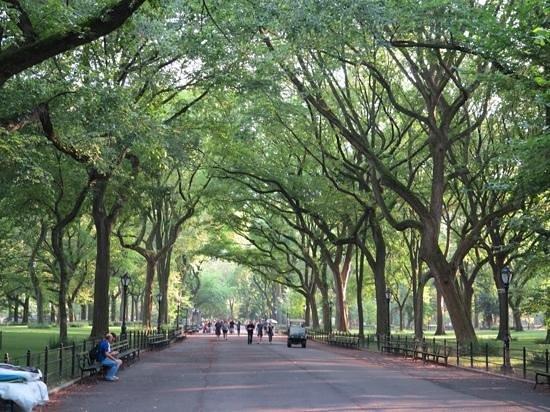 Central Park: park pathways