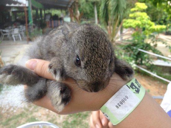 PD Ostrich Show Farm: cute rabbit in the petting zoo
