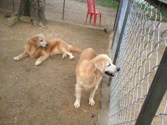 Port Dickson, Malásia: Dog zoo