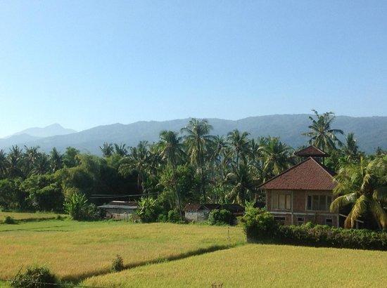 Bali Paradise Hotel Boutique Resort: More views