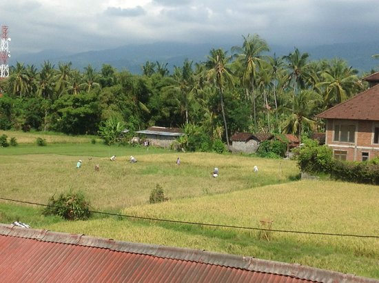 Bali Paradise Hotel Boutique Resort: From window facing the rice paddies and mountain