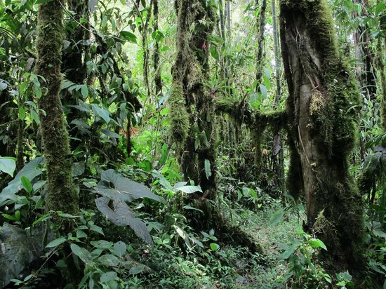 Maquipucuna Reserve: Immersion totale dans la nature