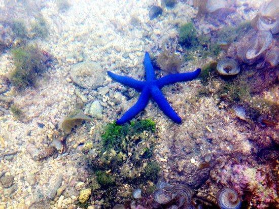 Outrigger Fiji Beach Resort: Starfish