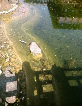 Fische im teich bild von japanischer garten bad for Welche fische in teich
