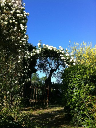 Fortezza de'Cortesi: come into the garden under the roses arch
