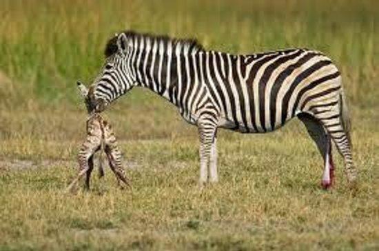 Bonamanzi Game Reserve: Our new resident