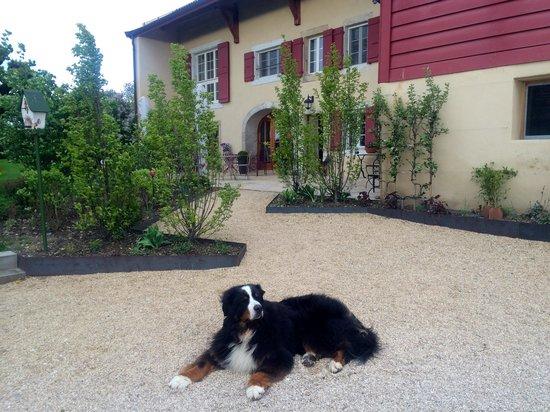 La Belle Saison's friendly Bernese Mountain Dog.
