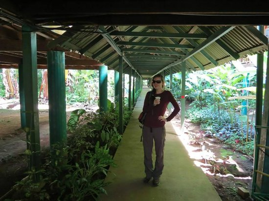 Selva Verde Lodge: Covered Walkway