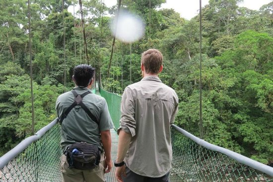Selva Verde Lodge: Guided walks over epic suspension bridges.