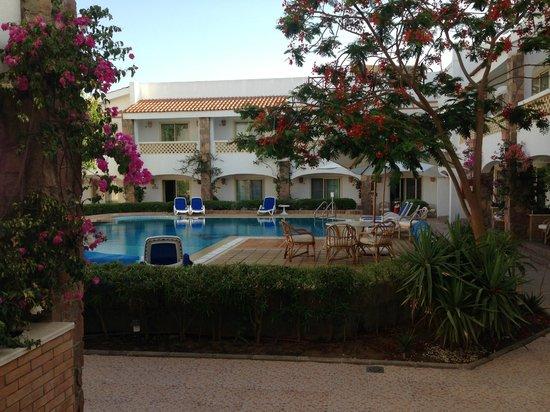 Camel Dive Club & Hotel: Swimming Pool