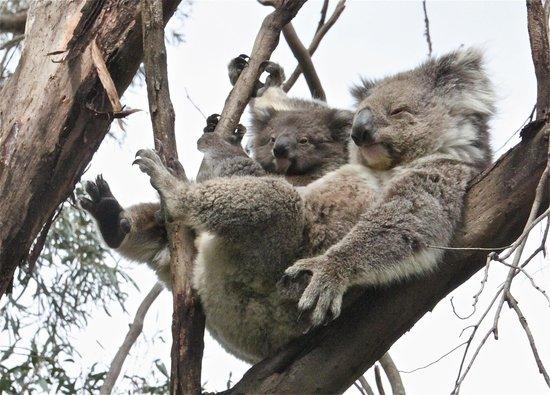 Wanderers Rest of Kangaroo Island: Familiehygge