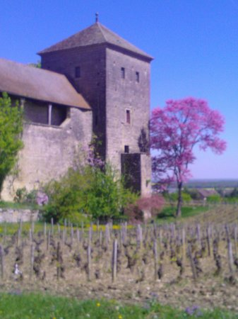 Wine and Voyages : Stunning vineyards