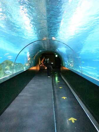 Coex Aquarium: Under the water tunnel