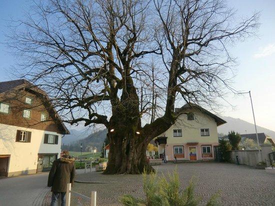 1000 Jahrige Linde Bild Von Hotel Alte Post Faistenau Tripadvisor