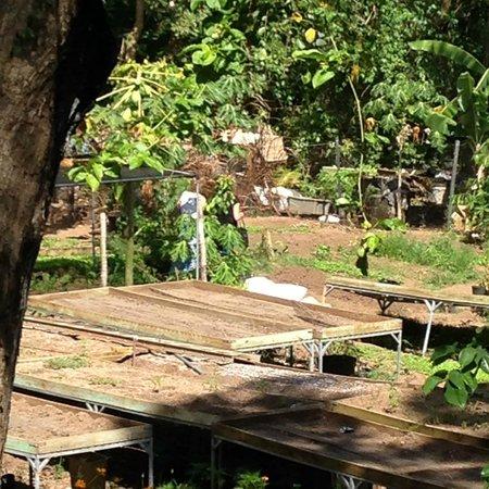 Tin Box: The resturant's own garden.
