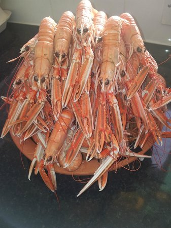 The Squat Lobster: Langoustine from here in the bay