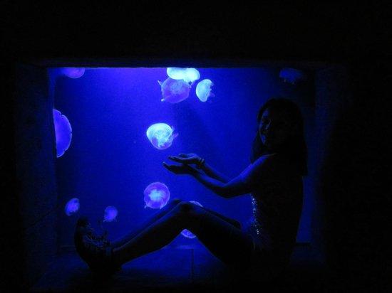 Marine Habitat at Atlantis: Jellyfish at the Dig