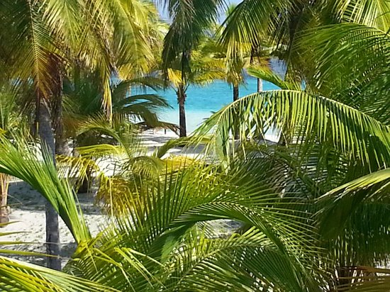 Pelican Beach - South Water Caye: Through the palms to the ocean