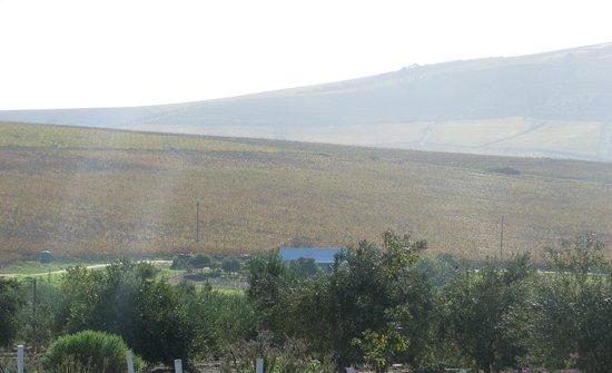 Mulderbosch Vineyards : View
