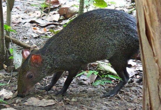 Chan-Kah Resort Village: Naturaleza en contacto. Animalitos y plantas por doquier