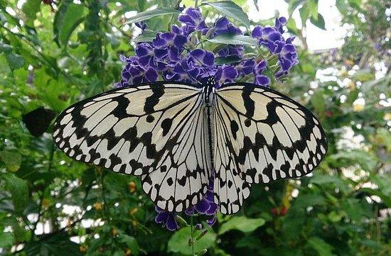 Nambo Paradise Botanical Garden : 蝶が離し飼いになっている温室があるのです!