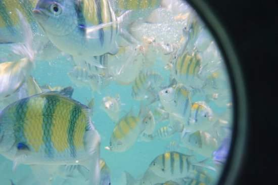 Freedom Beach: Fish Everywhere