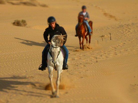Equi Evasion: Über die Sanddünen in Richtung Strand...