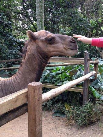 Sao Paulo Zoo : Passeio ZooSafari