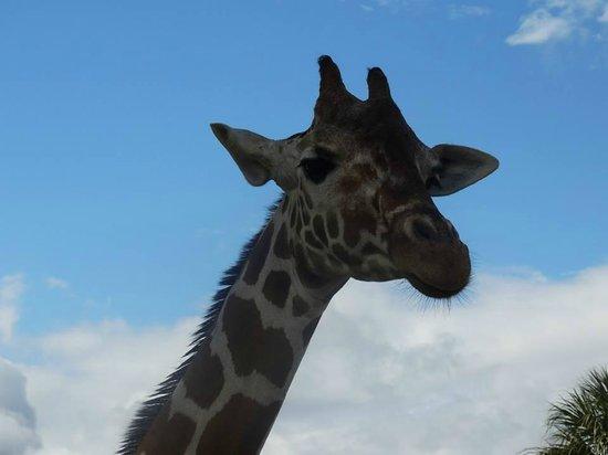 Busch Gardens : Serengueti Safari
