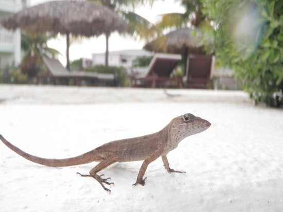 Grand Palladium Lady Hamilton Resort & Spa: These cute guys are all over the place (sometimes in the outdoor shower) :)
