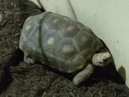 Clyde Peeling's Reptiland: Land turtle