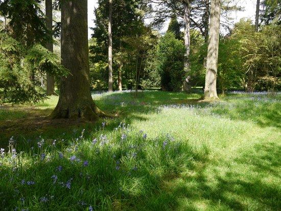 Westonbirt Arboretum : Complete with blurbells