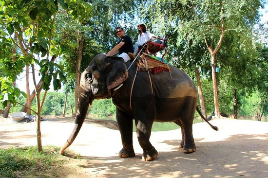 Muang Sing Elephant Village - Picture of Thai Private Tour